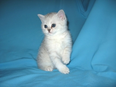 Чудо-котик..