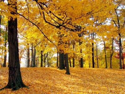 хотите помечтать, зайдите в Осень...