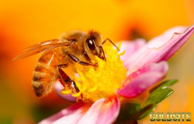 Пчелы - Трудяжки