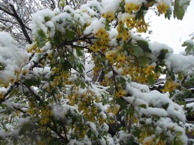 Весной вернулась к нам зима