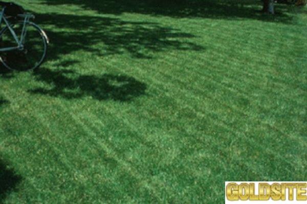 заказать и купить рулонный газон  высокого качества