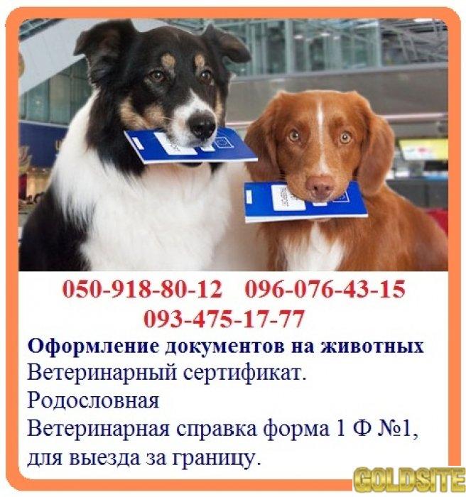 Оформление ветеринарных документов на животных - быстрое оформление справка форма 1 Ф №1,  для выезд