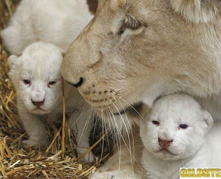 Приглашаю в зоопарк 12 месяцев