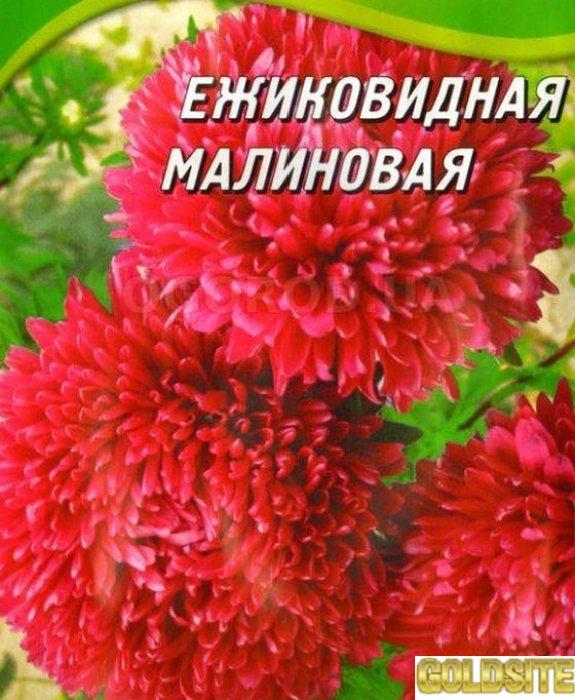 """Насіння айстри """"Їжакова малинова"""""""