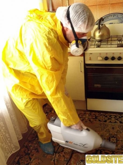 Дезинсекция помещений газом в Киеве.  Уничтожение насекомых