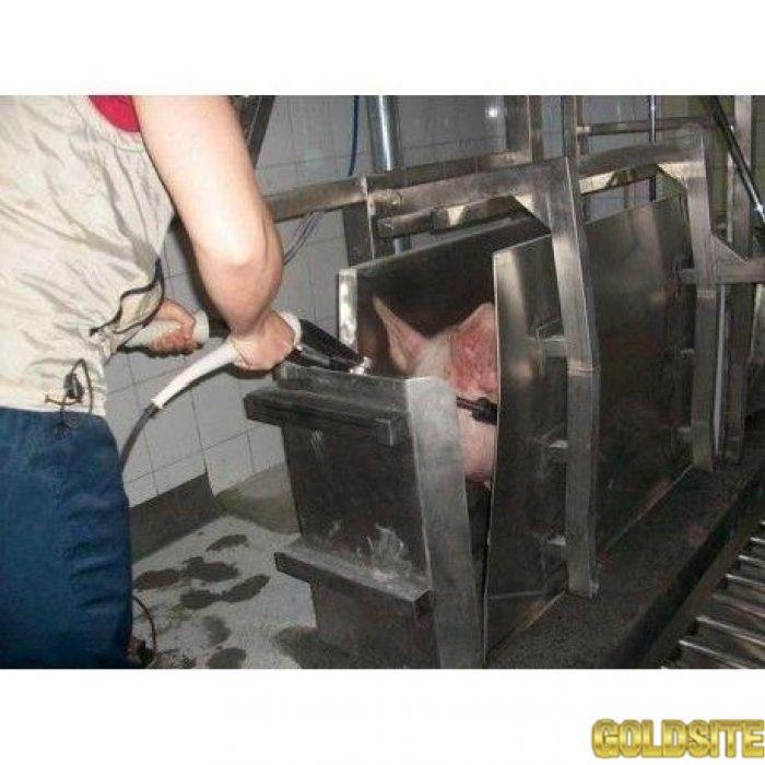 Бокс глушения свиней
