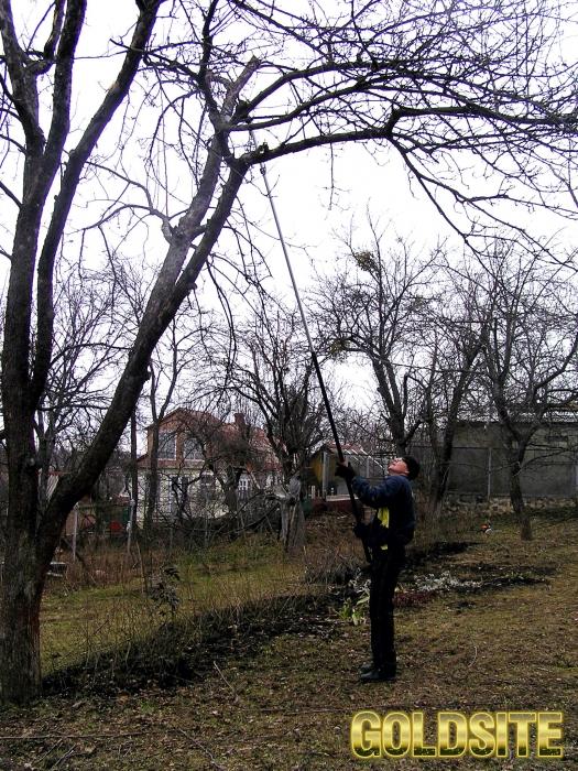 Обрезка старых деревьев