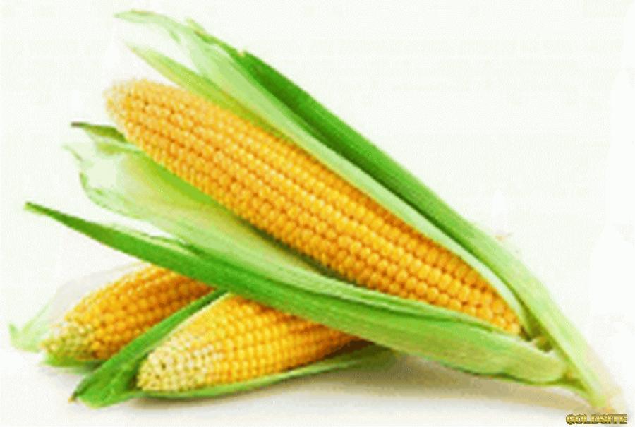 Куплю кукурудзу.