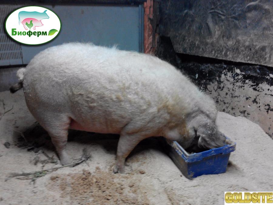 Ферментационная подстилка Биоферм для животных и птиц (свиней,  кур,  гусей,   телят,   КРС)