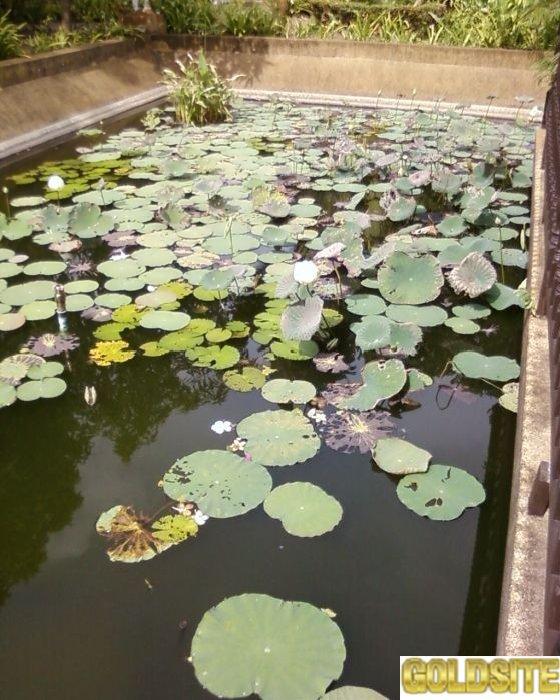 Биопрепарат Понд-плюс для удаления осадка в прудах и аквариумах.